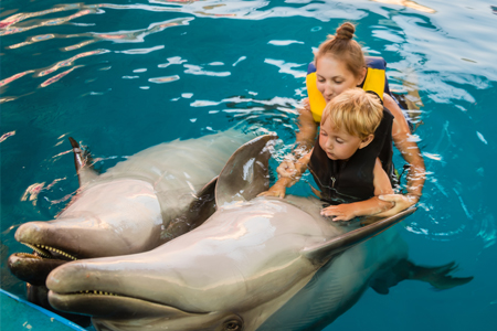 Dolphin therapy curacao